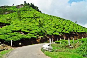 cheap munnar tour packages