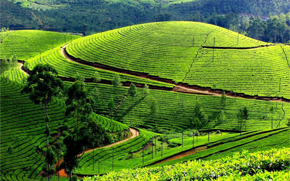 Ooty tour package - best ooty trip